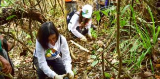 Honda Tree Planting activity