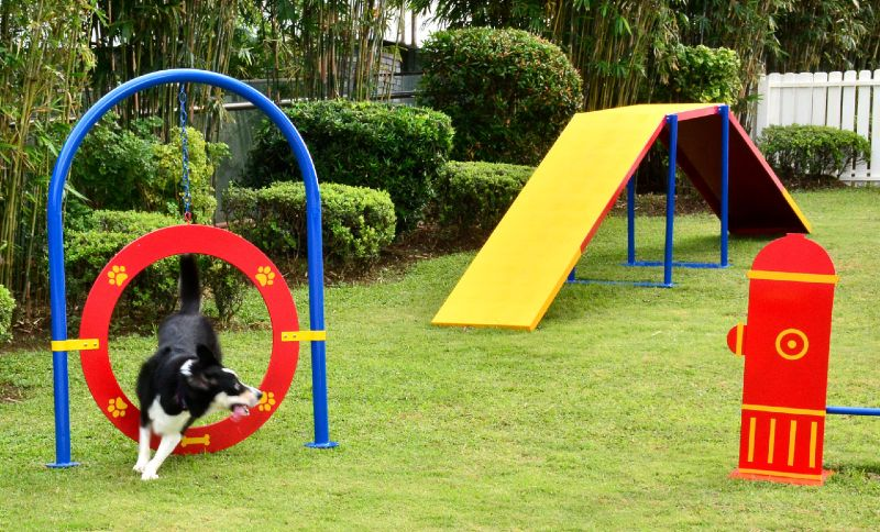 Paw Park is a pet obstacle course for your dogs - Speed ...